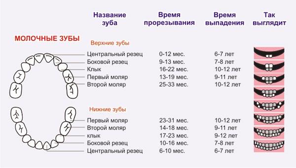 Схема выпадения молочных зубов у детей: какие зубы меняются и сколько выпадает