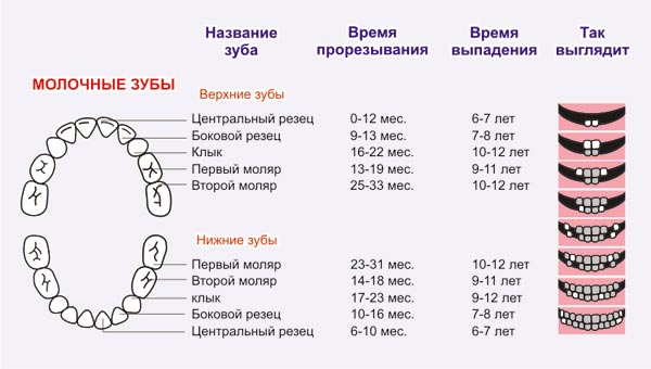 Молочные зубы в каком возрасте они начинают выпадать