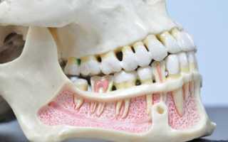 Сколько зубов на верхней челюсти человека