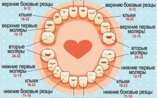 Как выглядит молочный зуб