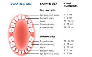 Какие зубы не меняются у человека