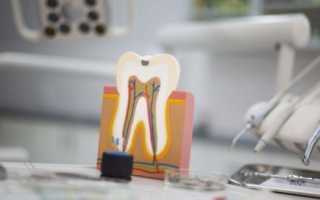 Строение челюсти человека зубы