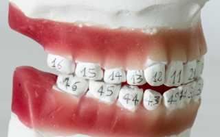 Зубы по номерам