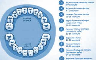 Как режутся верхние зубы у грудничков