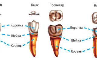 Остался корень зуба